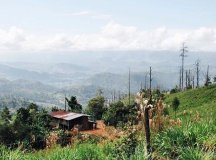 Honduras @nonfictioncoffee